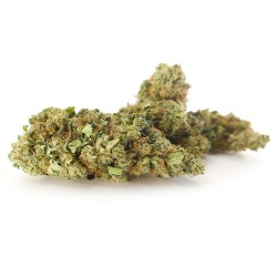 Orange Bud Cannabis CBD - Fleurs CBD